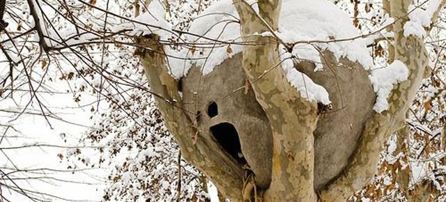 Un nido